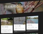 洗足池の野鳥写真集